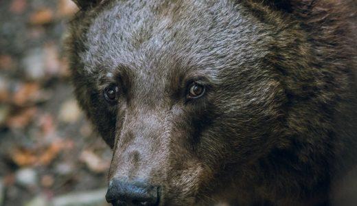 熊に遭遇しないようにするべき2つのこと