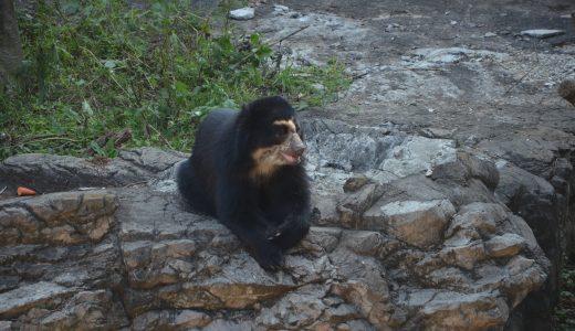 横浜市内でクマを見れる動物園