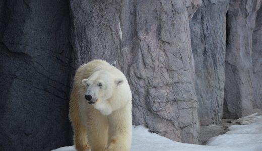 北海道に行ってクマ牧場を満喫したい