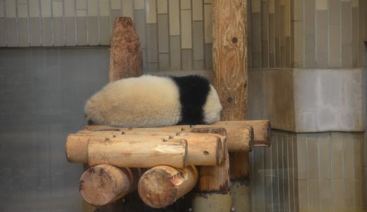 上野動物園に行かずに「シャンシャン」に毎日会う方法